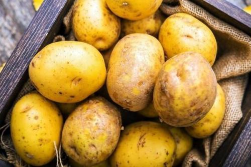 Рассыпчатые сорта картофеля для Средней полосы. Список лучших сортов картофеля по алфавиту
