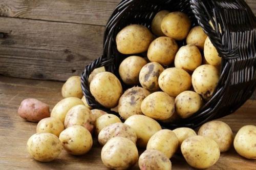 Жесткая картошка. Почему при варке картофель рассыпается?