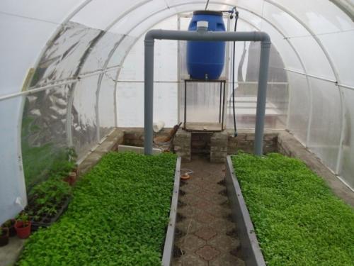 Сидераты в теплице весной. Почему сидераты нужно сеять в теплице?
