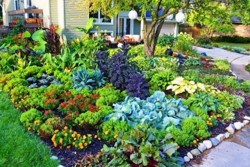 Овощи для дачи. Что вырастить на огороде