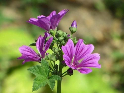 Холодостойкие растения это. Морозостойкие цветы и растения для сада