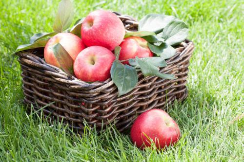 Как сохранить яблоки в опилках. Как сохранить яблоки до весны