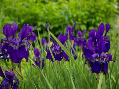 Какие низкорослые цветы можно посадить на могиле. Важные моменты