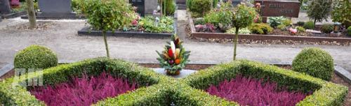 Травянистые растения на могилу. Выбор растений для озеленения могилы 05