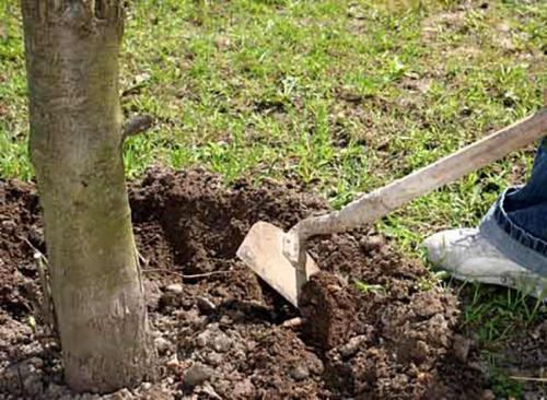 Подготовка земли к зиме осенью. Осенняя подготовка почвы к зиме