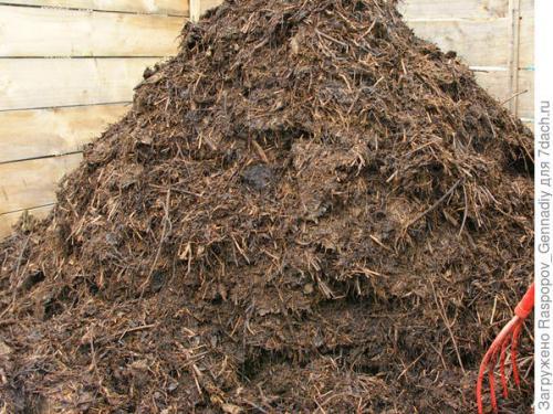 Сколько созревает компост. Есть ли разница, между понятиями: компост, перегной, гумус Вначале о терминах.