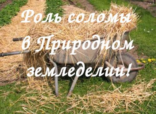 Использование соломы на огороде. Солома в Природном земледелии!