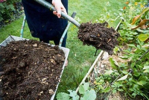 Как лучше вносить навоз в почву