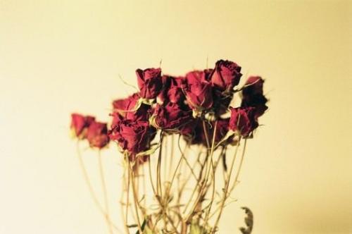 Как правильно хранить сухоцветы. Как правильно засушить растения