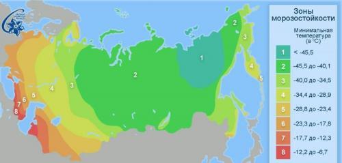 Холодостойкость растений. Понятия и особенности зимостойкости и морозоустойчивости растений