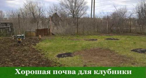 Подготовка грядок для клубники. Третий фактор – состав и структура почвы