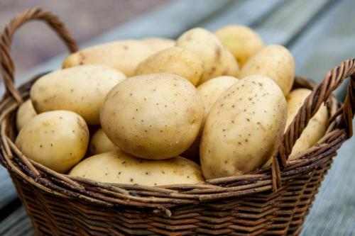 При какой температуре мерзнет картошка. Температурные особенности 03
