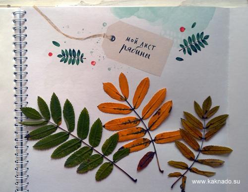 Листья деревьев. Делаем гербарий
