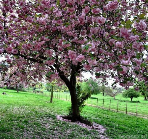 Полив деревьев ранней весной. Когда следует поливать плодовые деревья