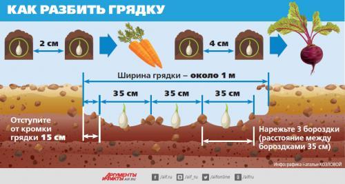 Боится ли морковь весенних заморозков. Подзимний сев: морковь и свёкла поспеют на 3 недели раньше