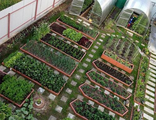 Чем огородить грядки на даче дешево. Делаем ограждения вокруг грядок из различных материалов