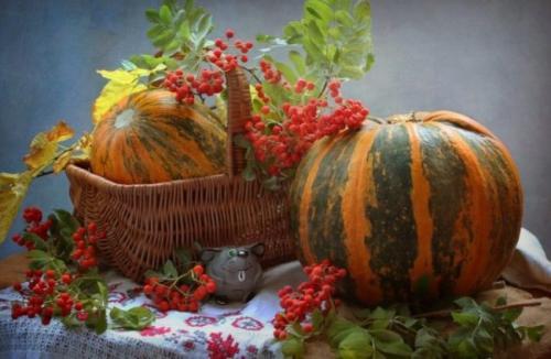 Тыква сорт, как кабачок. Лучшие сорта тыквы мускатного, твердокорого и крупноплодного вида