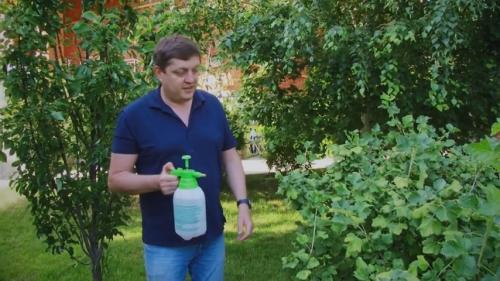 Адская смесь против болезней и вредителей в саду и огороде рецепт.