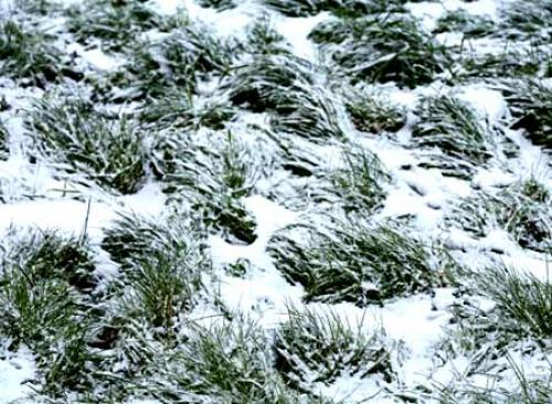 Когда косить траву последний раз перед зимой. Стрижка газона последний раз осенью