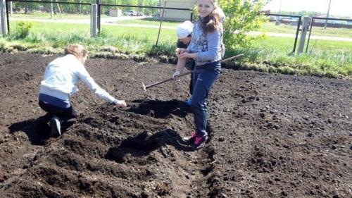 Осенняя подготовка грядки под морковь. Как подготовить землю на грядке