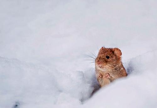 Приметы в мире животных о погоде. Другие животные
