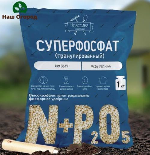 Фосфорное удобрение для клубники. Полезные советы по подкормке клубники фосфором
