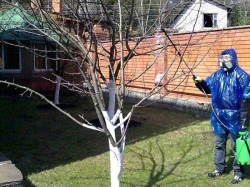 Как лечить паршу на яблоне осенью. Химические средства