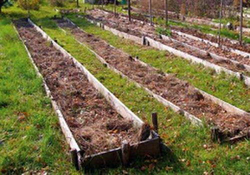 Как приготовить землю к зиме. Готовим почву к зиме