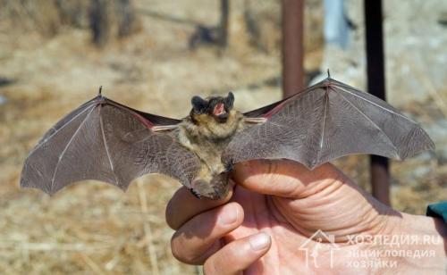 Как избавиться от летучих мышей на даче под крышей. Методы борьбы с вредителями