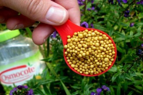 Как приготовить внекорневую подкормку для огурцов калий. Разновидности калийных удобрений