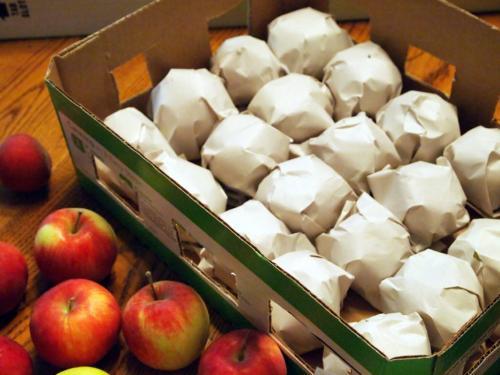 Как сохранить дома яблоки. Хранения яблок на зиму в квартире