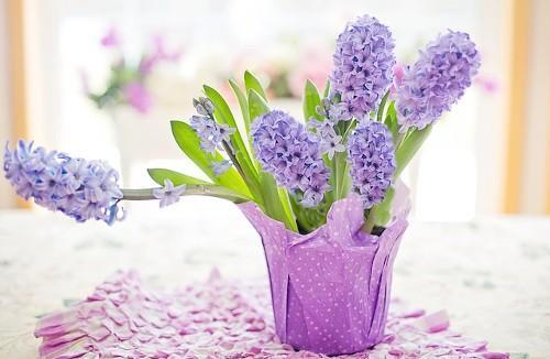 Теплолюбивые растения названия. 7 самых теплолюбивых комнатных растений