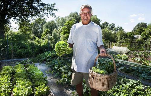 Огород без хлопот для пожилых, как делать умные грядки. Огород без хлопот для пожилых —, как делать умные грядки, особенности