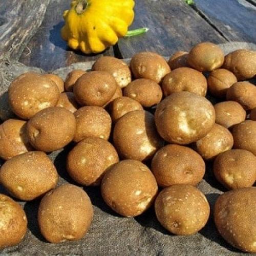 Картошка разваристая. Идеальный картофель для варки