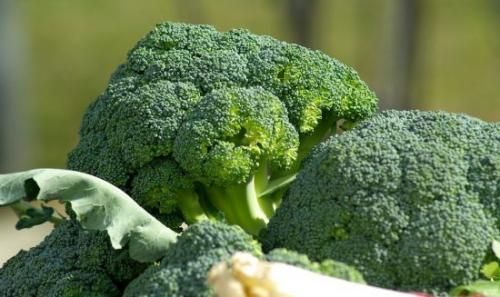 Капуста брокколи агротехника выращивания. Краткое знакомство