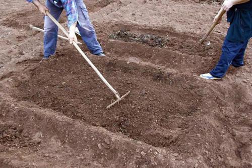 Подготовка почвы для клубники. Подготовка почвы, удобрение