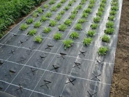 Как подготовить грядку под землянику осенью. Как подготовить грядку — подготовка земли к посадке клубники под агроволокном