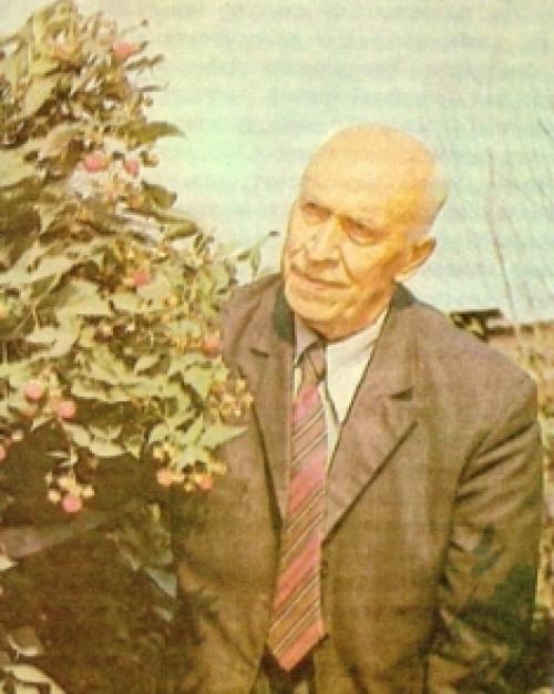 Выращивание малины по методу соболева. Малина по методу Соболева. Опыт садоводов.