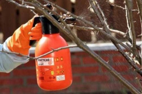 Химическая обработка сада осенью. Осенняя подготовка