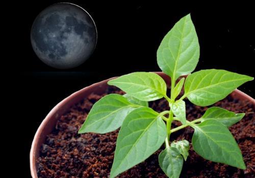 Лунный посевной календарь на 2019 год таблица. Лунный календарь на 2019 год с фазами луны