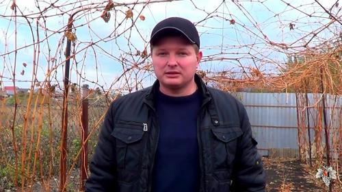 Какой мороз выдерживает виноград без укрытия осенью