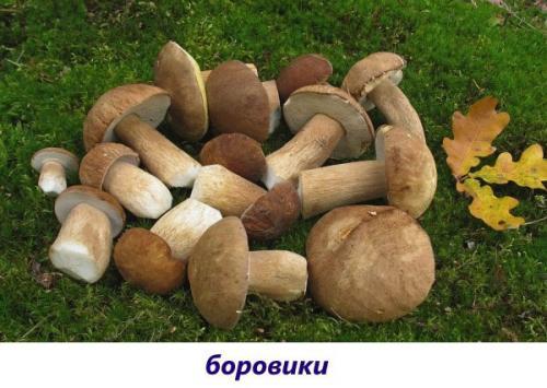 Съедобные грибы с коричневой шляпкой