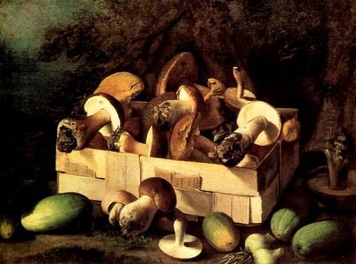 К трубчатым грибам относятся вешенка бледная поганка. Классификация грибов и определение их доброкачественности