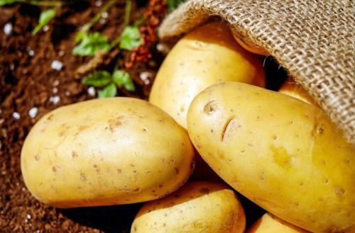 Плохой урожай картофеля причины и решения. В 2020 году дачники повсеместно жалуются на плохой урожай картофеля: в чем причина