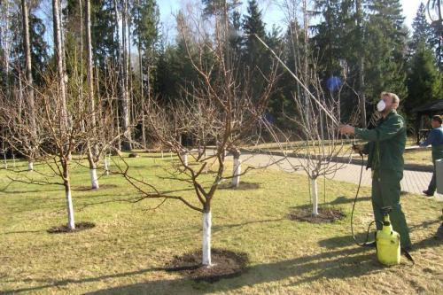 Подкормка деревьев весной мочевиной. Мочевина для удобрения почвы и от вредителей