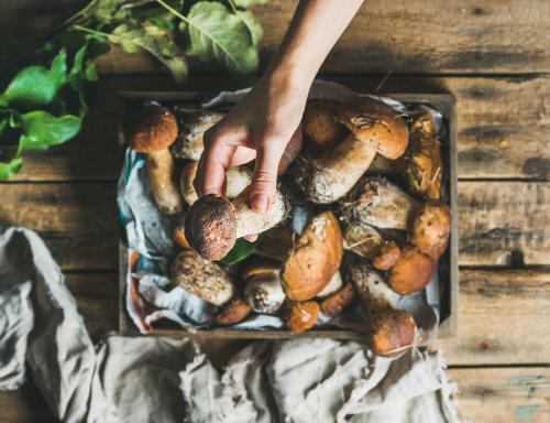 Маринование соленых грибов. Маринование белых грибов