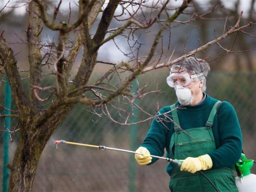 Чем обработать деревья осенью от болезней. Чем обрабатывать садовые деревья