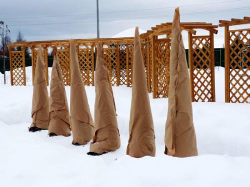 Укрытие деревьев на зиму агроволокном. Какие материалы лучше