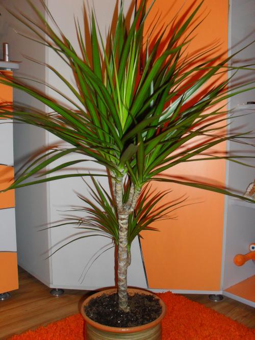 Комнатные растения. Домашние растения — самые красивые и популярные (50 фото)