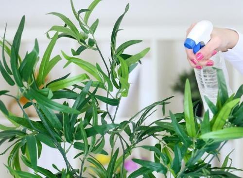 Борная кислота для цветов комнатных. Борная кислота для комнатных растений: особенности применения